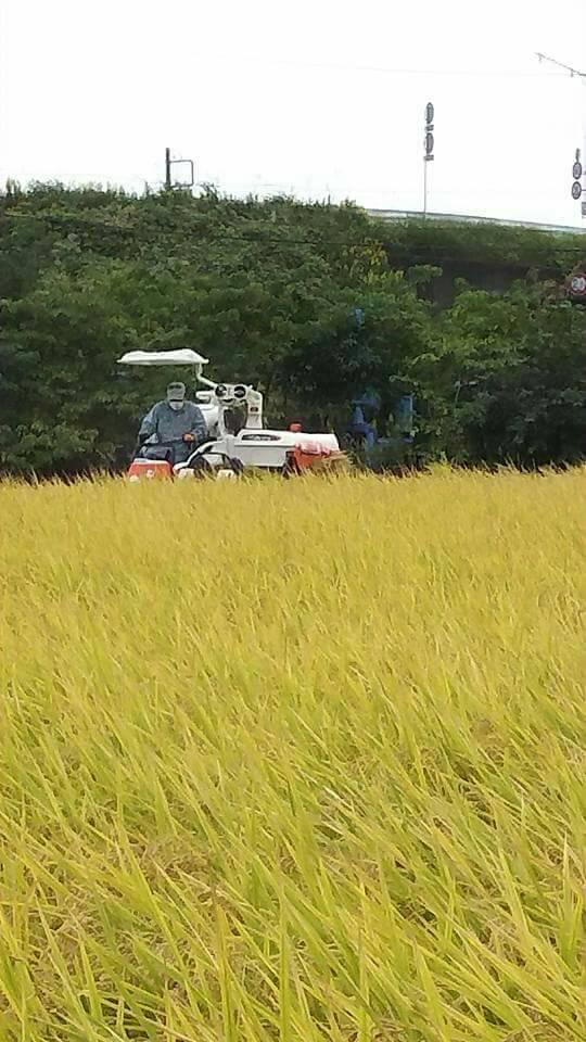 2017新米 稲刈り
