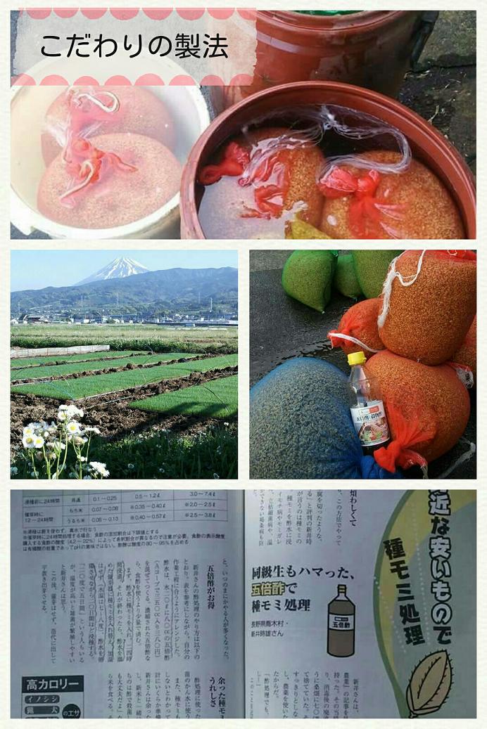 米作り 種籾